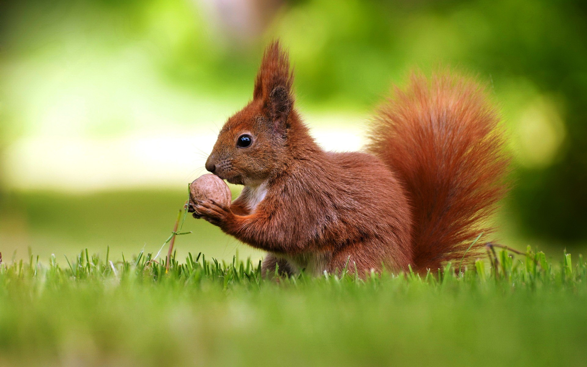 Cute Squirrel Hd Wallpaper Images Photos Picture