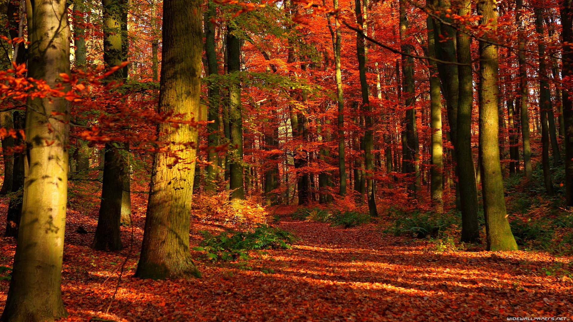 forest stuuning autumn wallpaper images free download