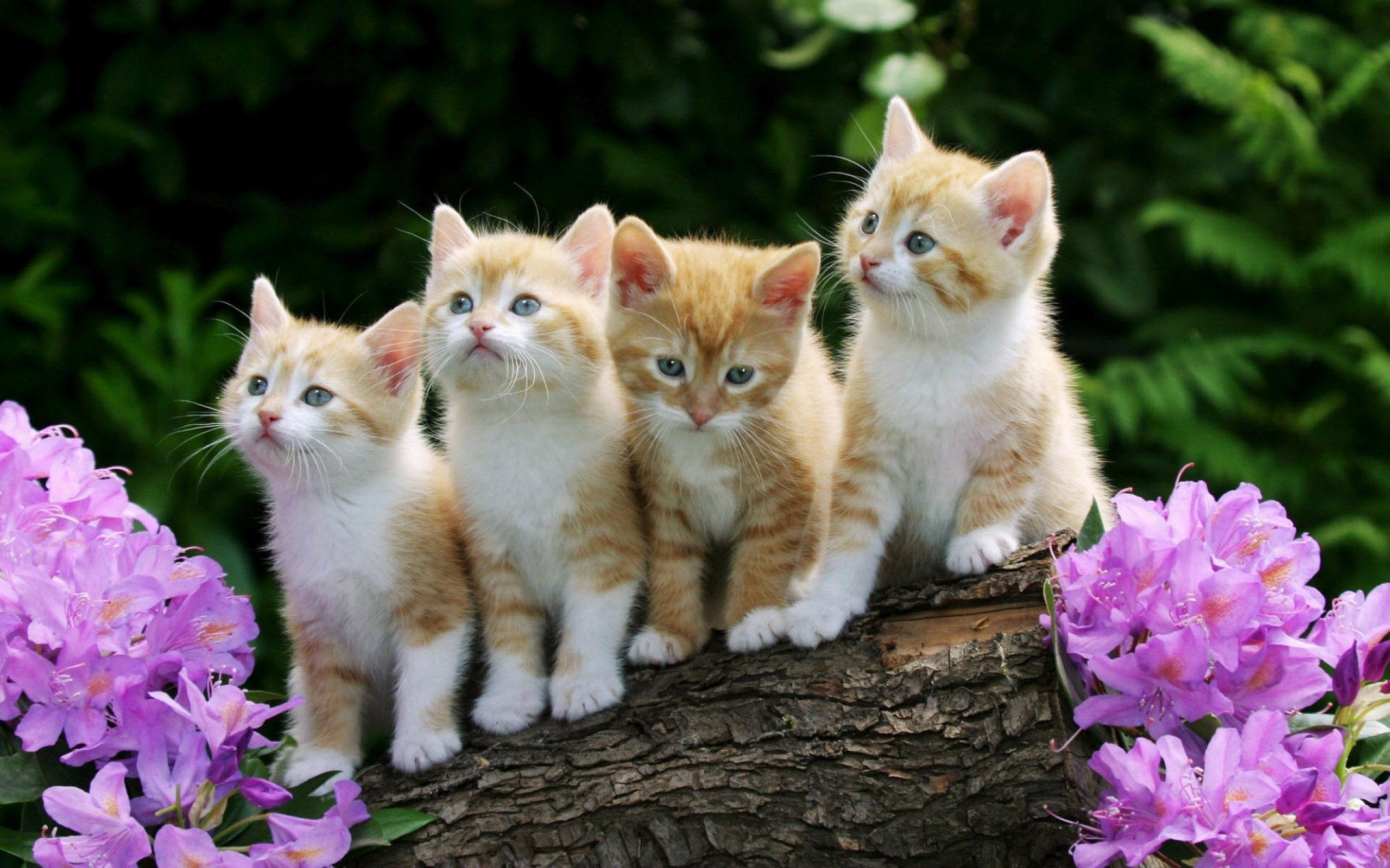 lovely new born baby kittens hd photo download