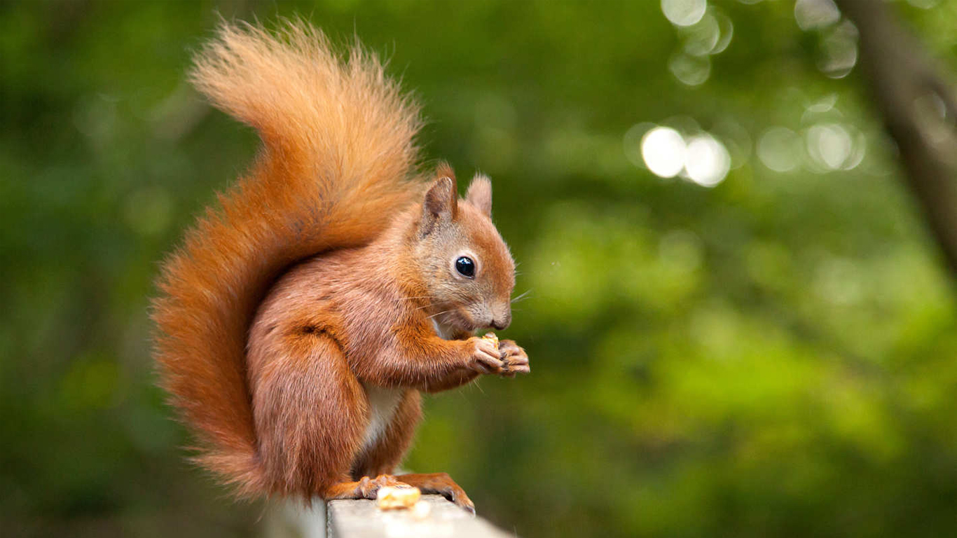 pet squirrel wallpaper download images picture photos