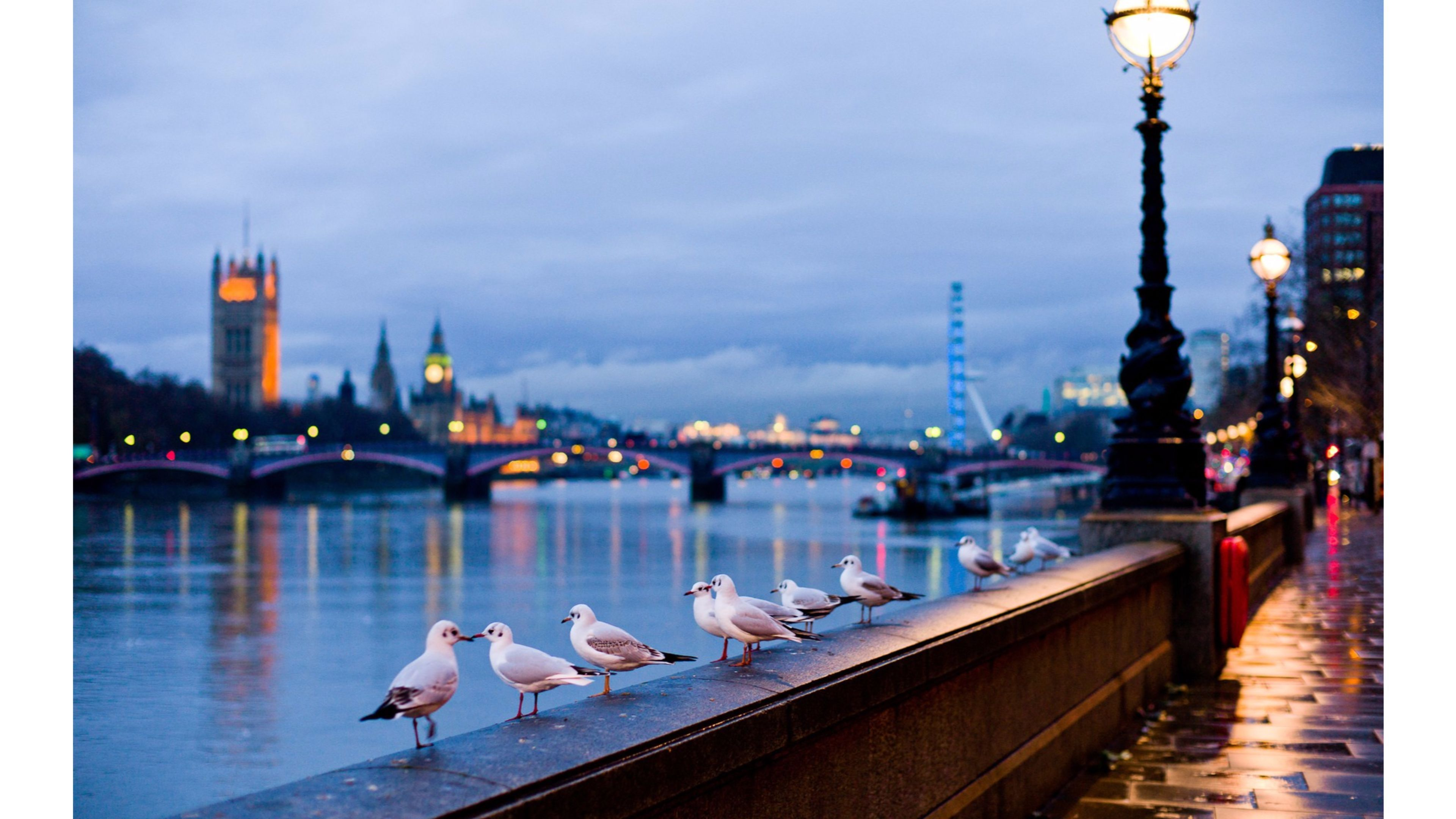 birds love on thames river london hd images