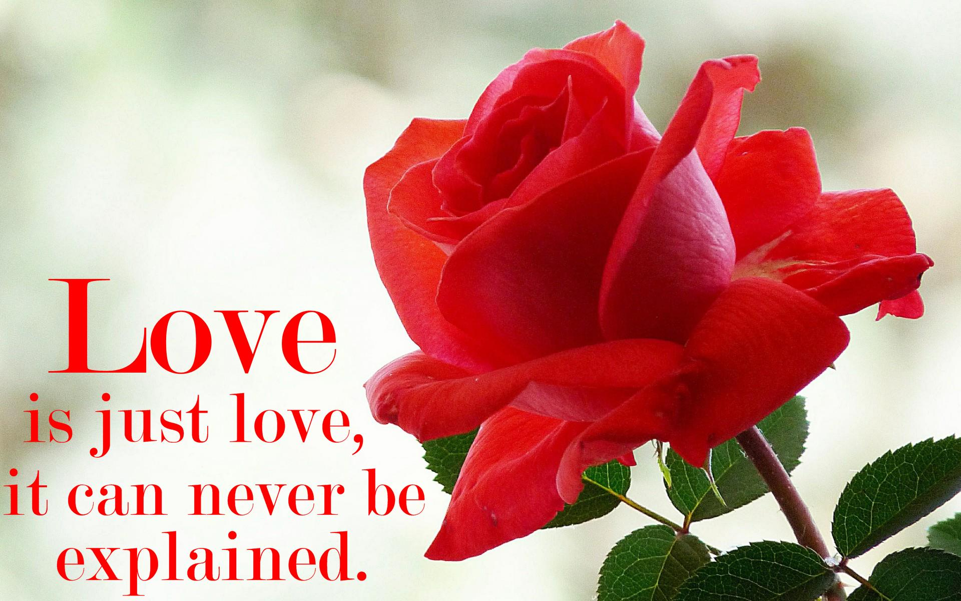 Nice Love Quotes Wallpaper