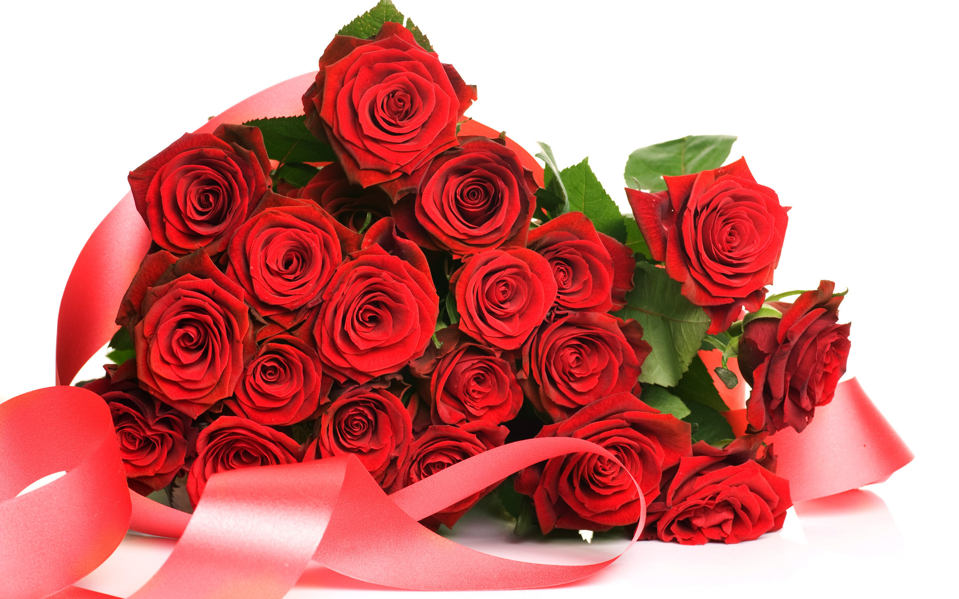 Lovely Red Roses Free Hd Wallpapers