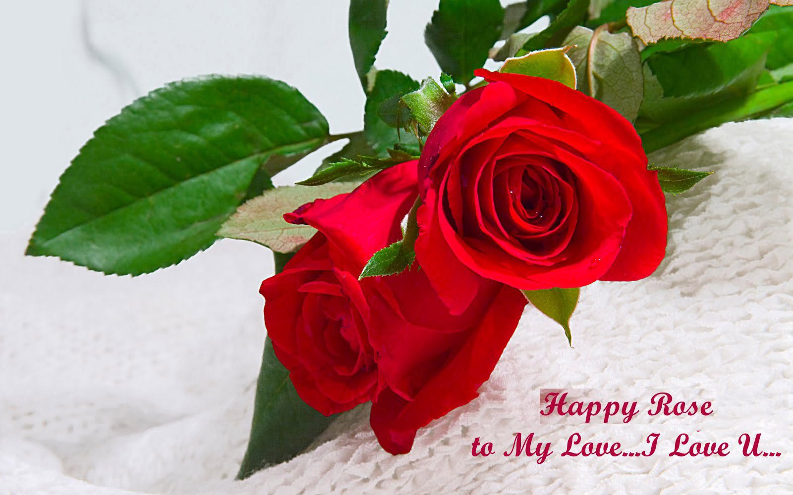 rose flower i love you wallpaper