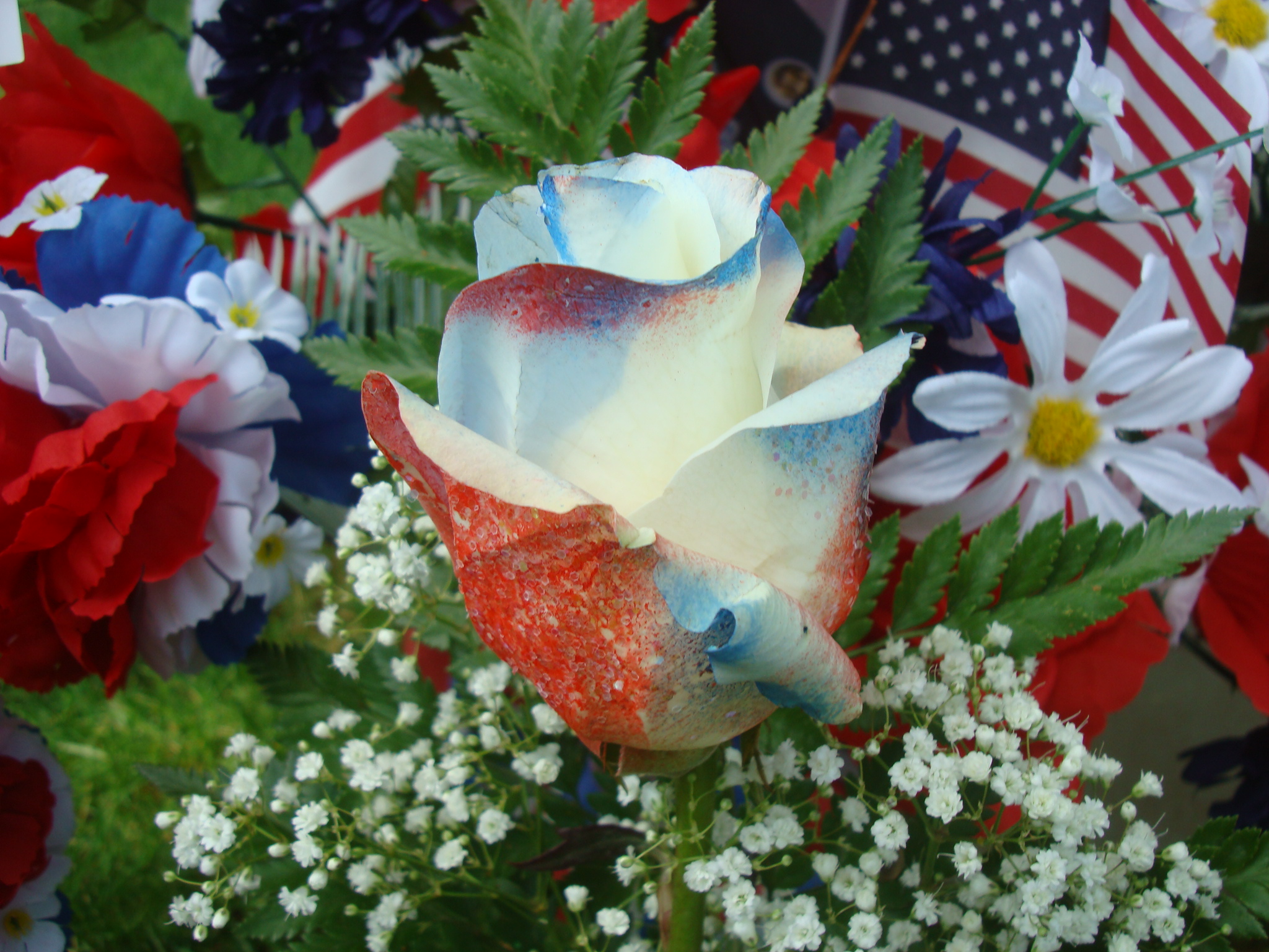 cute rose with american flag memorial day pictures download