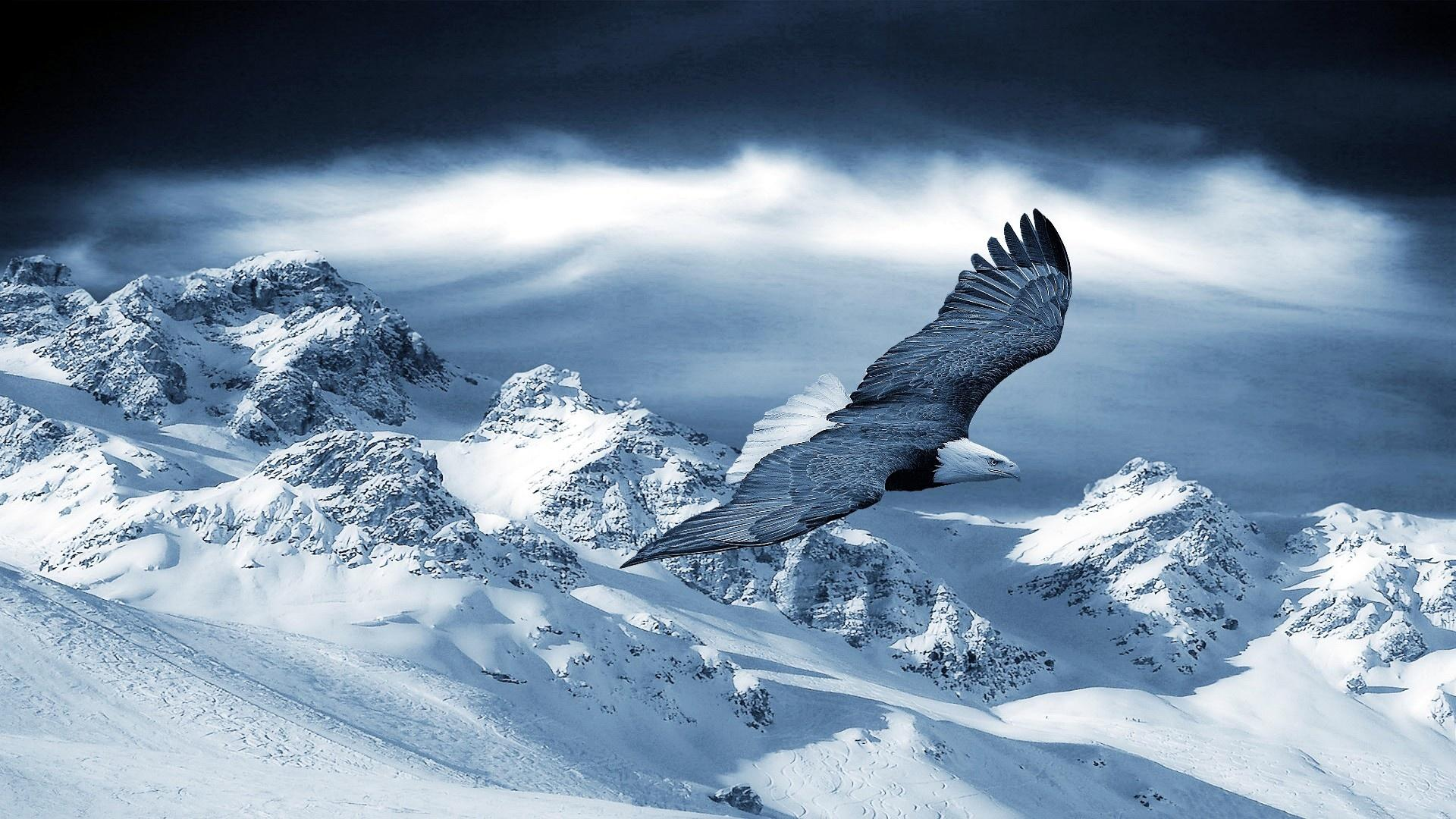 eagle flying above snow mountain wallpaper picture images