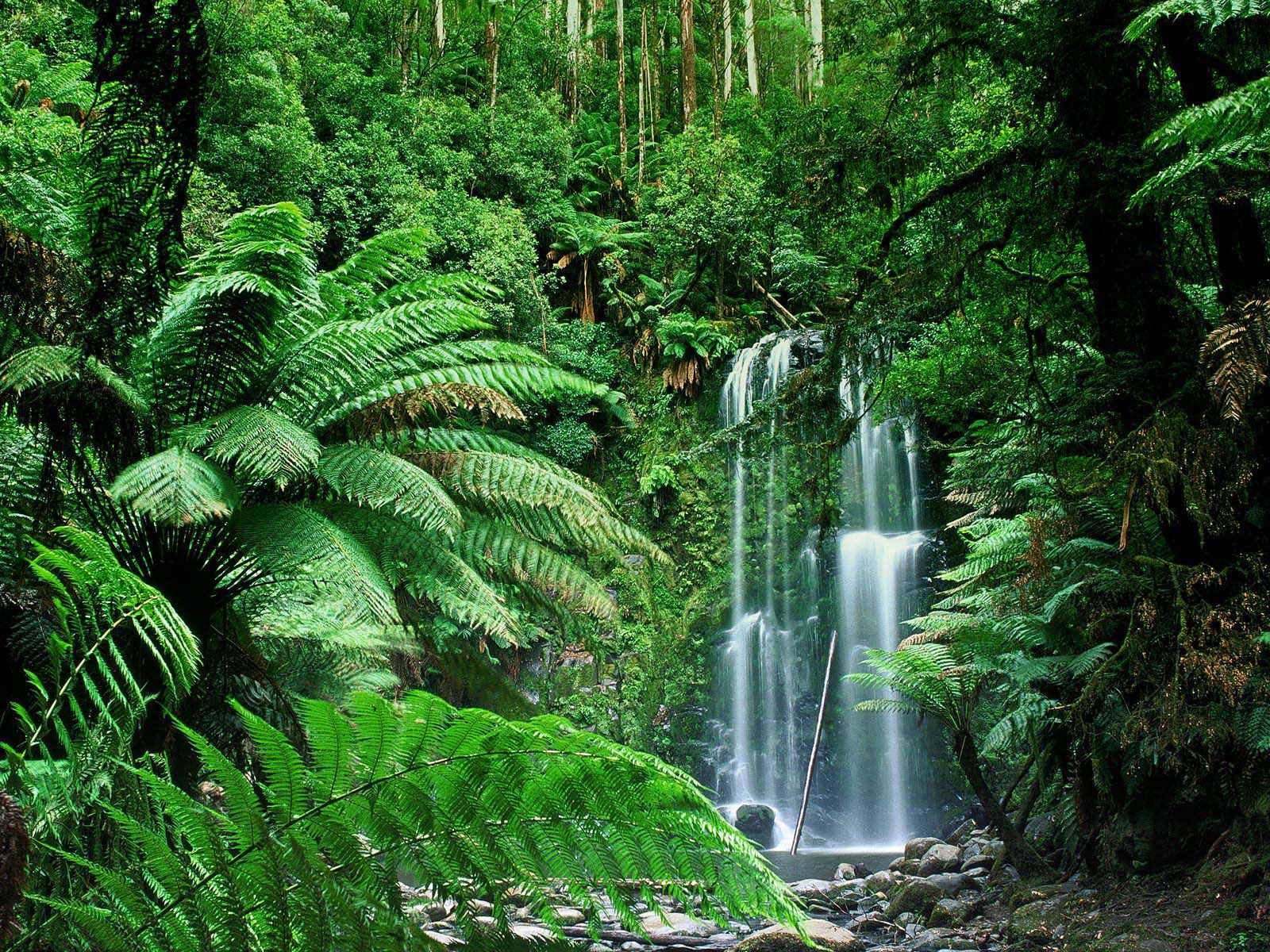 full green of beauchamp falls australia normal nice pictures