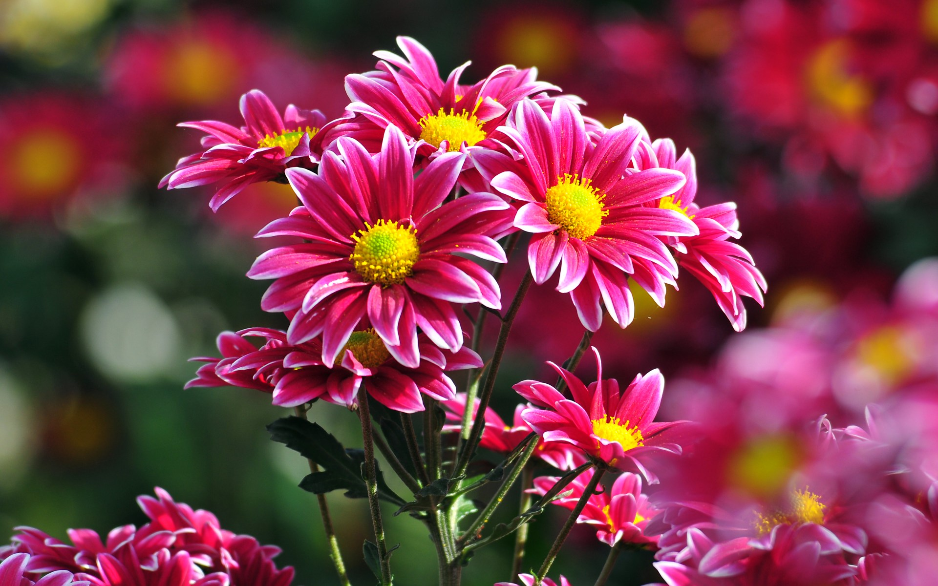 beautiful bunch of flowers wallpapers free download