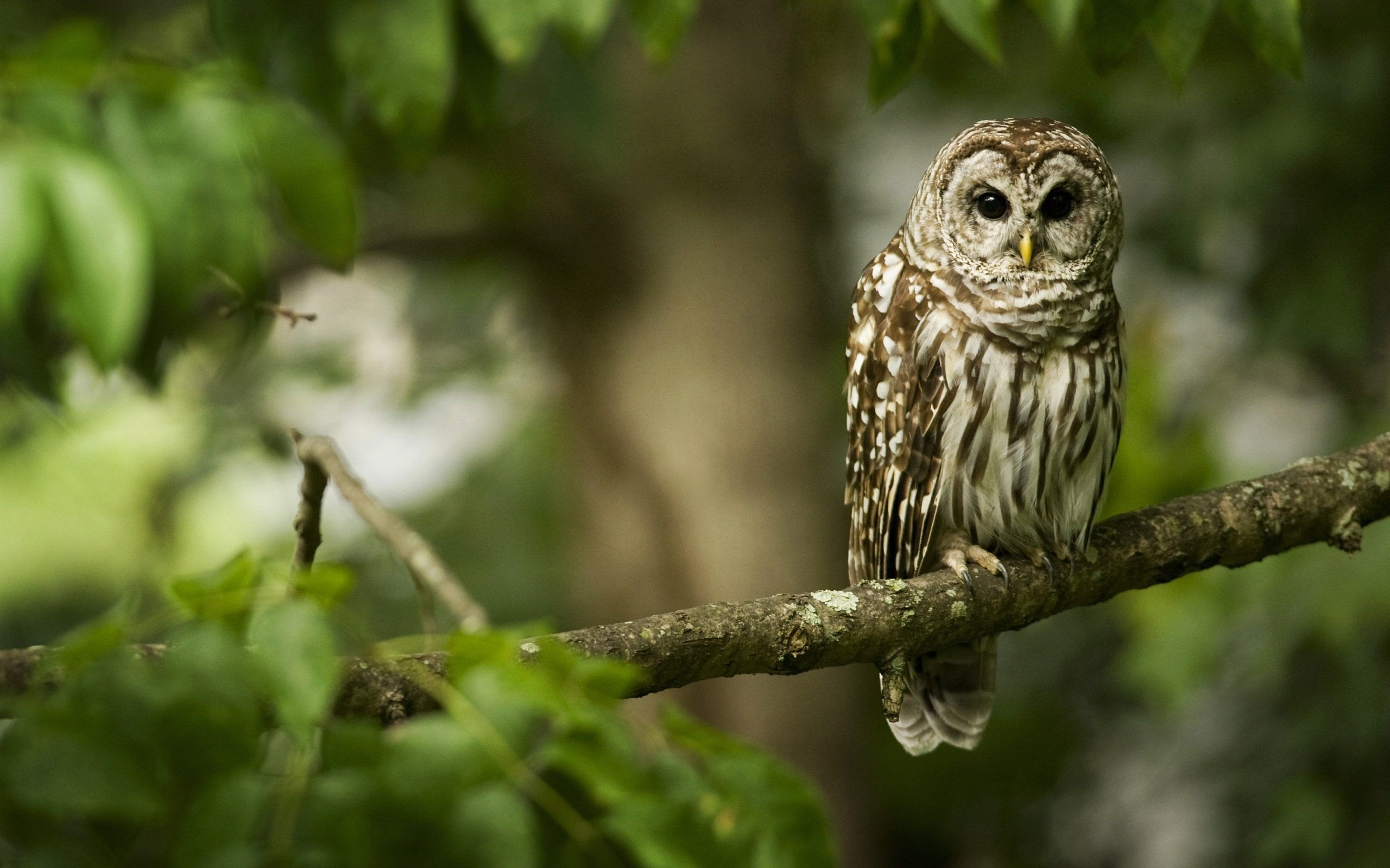 owl sitting on tree pics free download