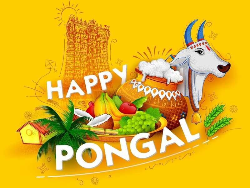 beautiful maatu pongal village festival greetings background images wallpaper download