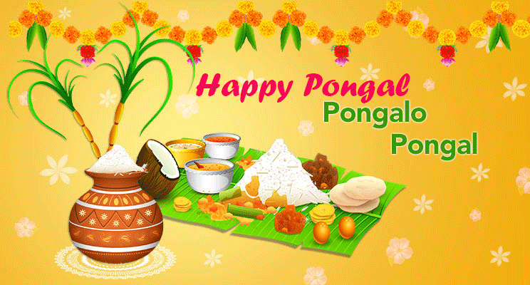 latest pongal fetival celebrations hd greetings wallpaper free download photo