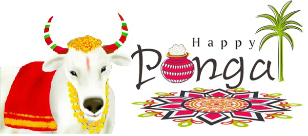 loving maatu pongal wishes celebrations hd image greetings trendy pongal wallpaper download