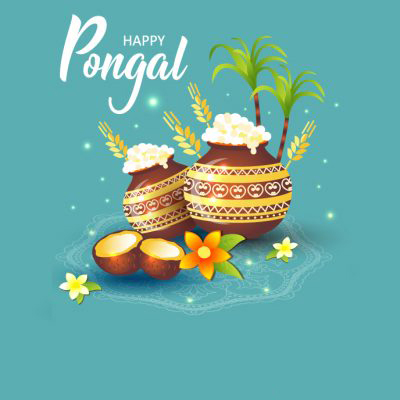 sweet pongal high resolution greeting cards fantastic whatsapp dp profile photos free download