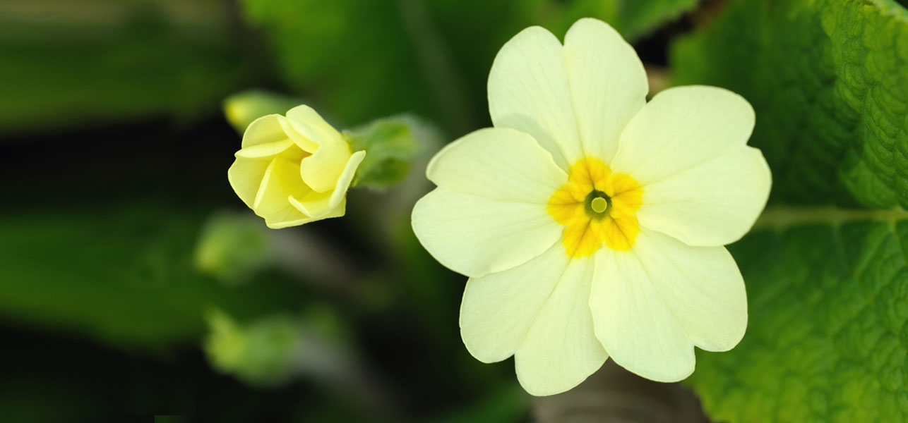 Desktop Mind Blowing Beach Primrose Wallpaper Free Download