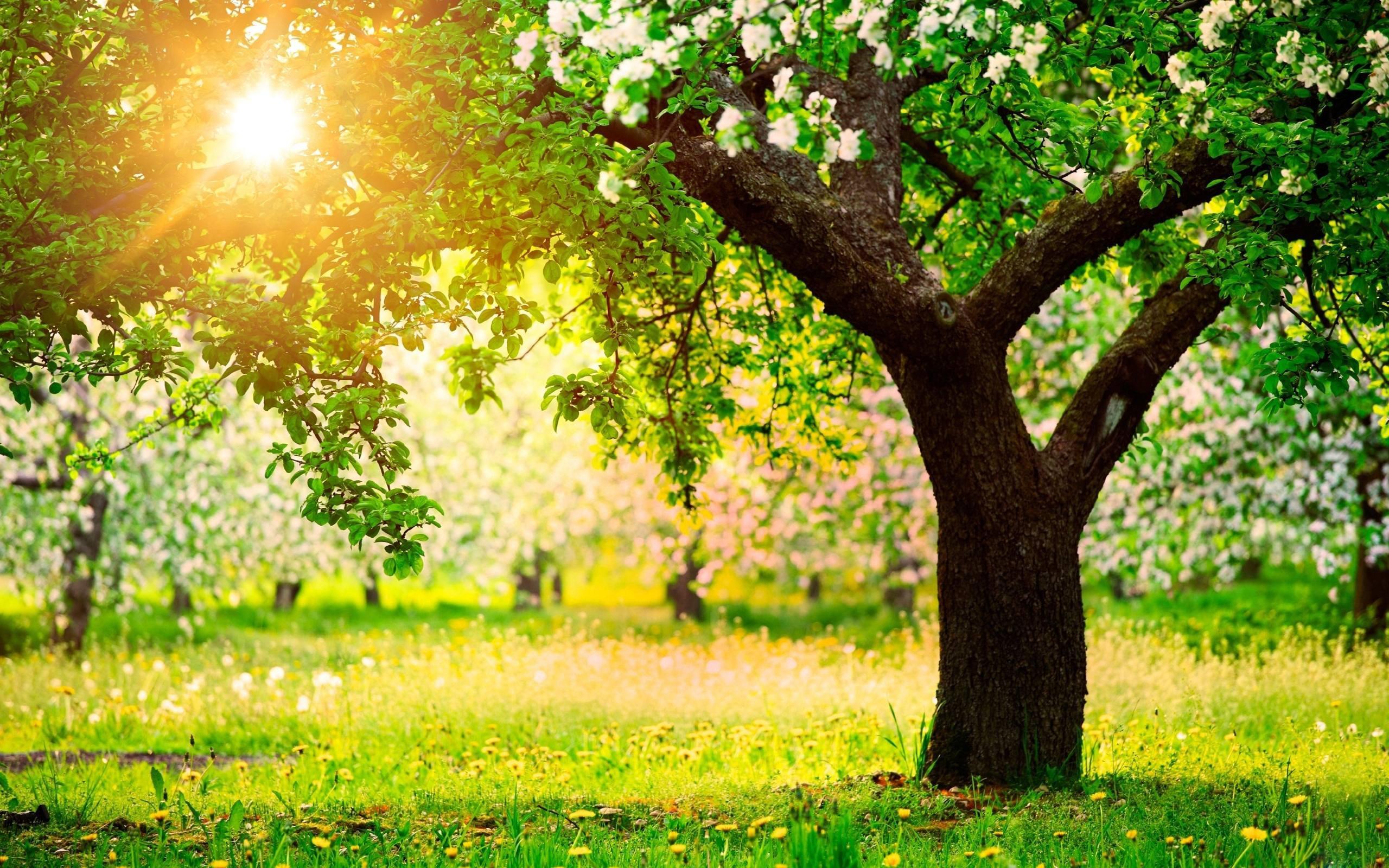 Beautiful Spring Nature Tree Desktop Wallpaper Image
