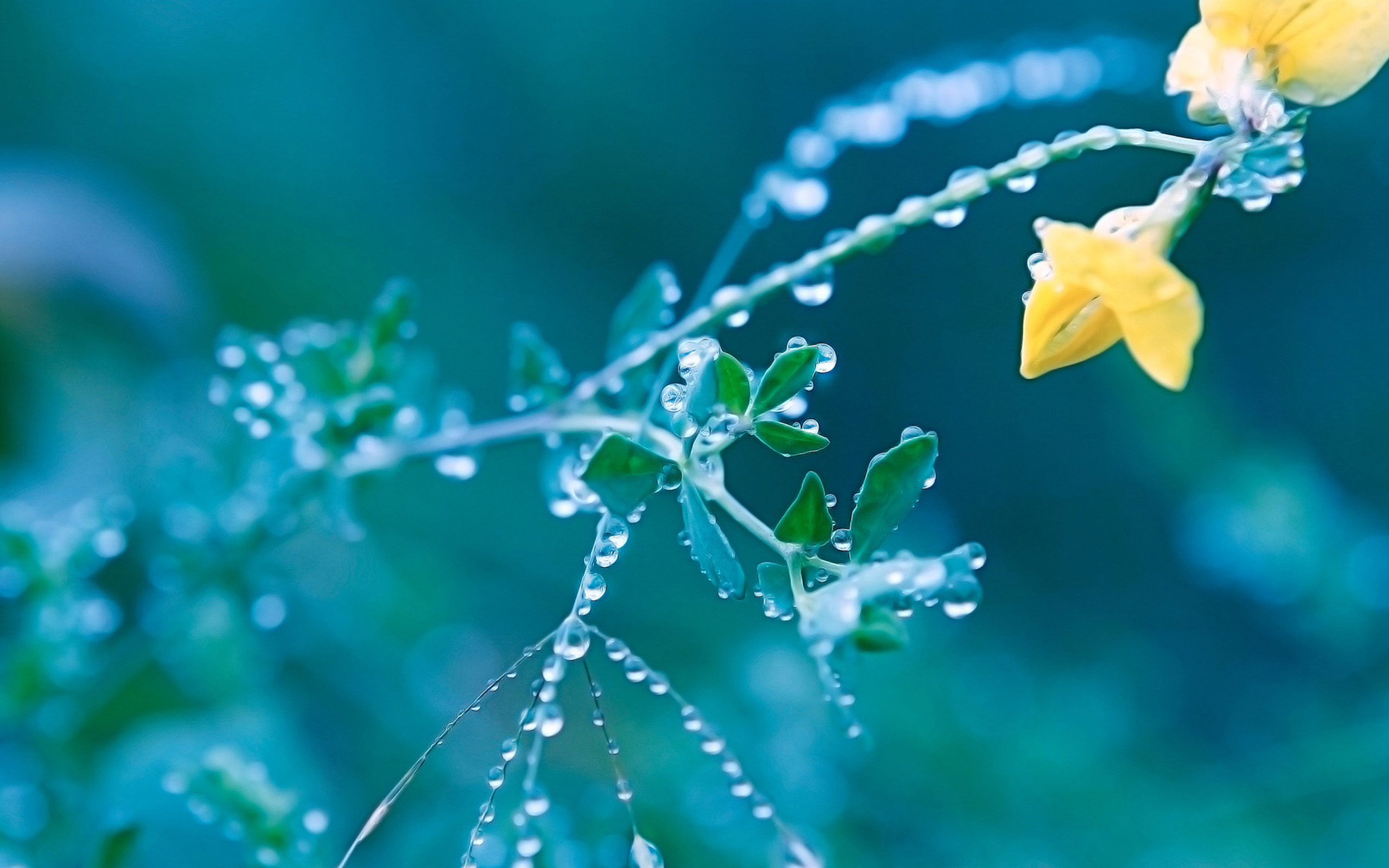 Drop Of Water In Yellow Spring Flowers Wallpapers For Computer Desktop