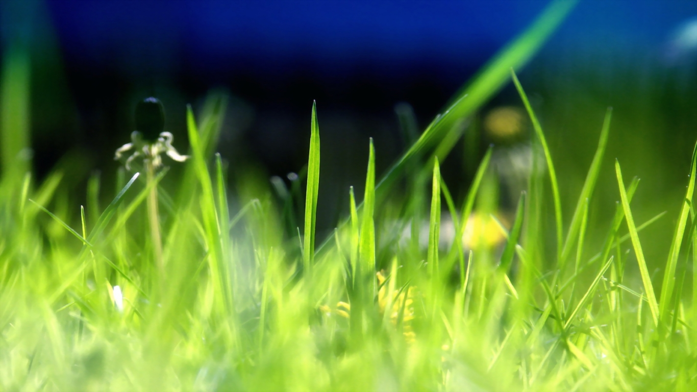 Grassy Images And Picture Wallpaper Download Flowers