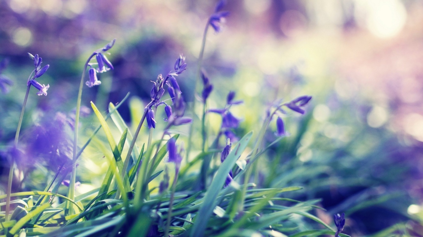 Lavender Spring Collection Wallpaper Free Download Photos And Image