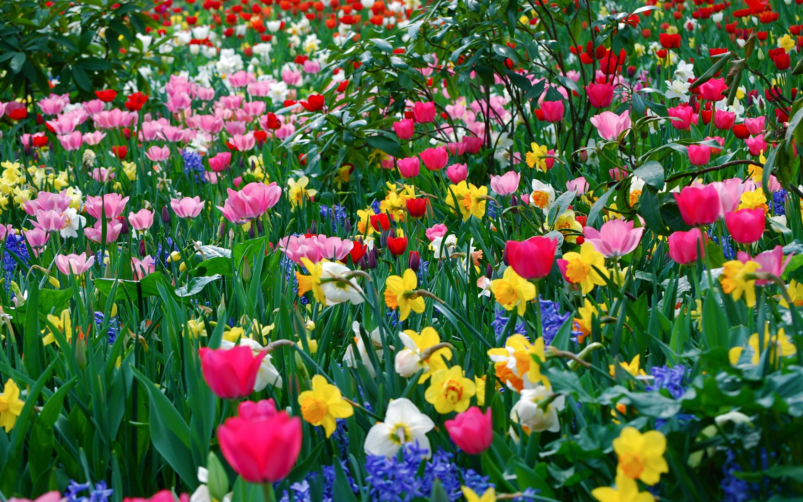 nice and beautiful flowers spring season hd free wallpapers