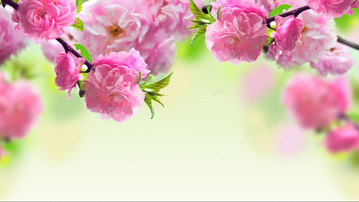 Spring Reason Free Imge Download Wallpaper Picture