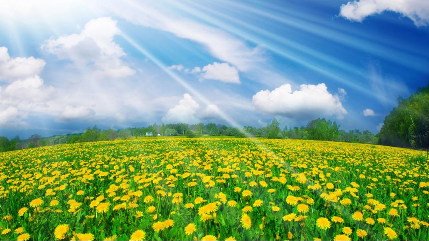 yellow flowers shines in earth