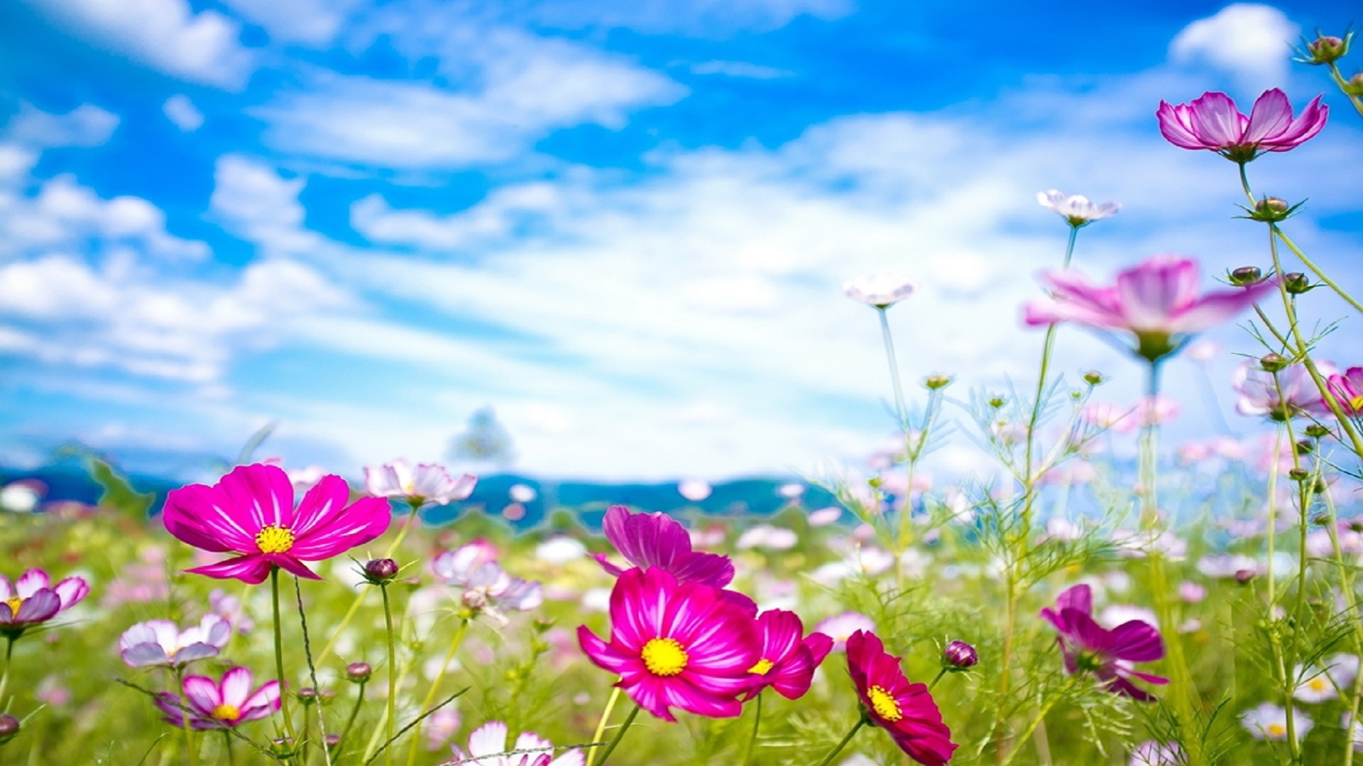 best moment of see the cloud close beautiful flowers summer season hd wallpapers free