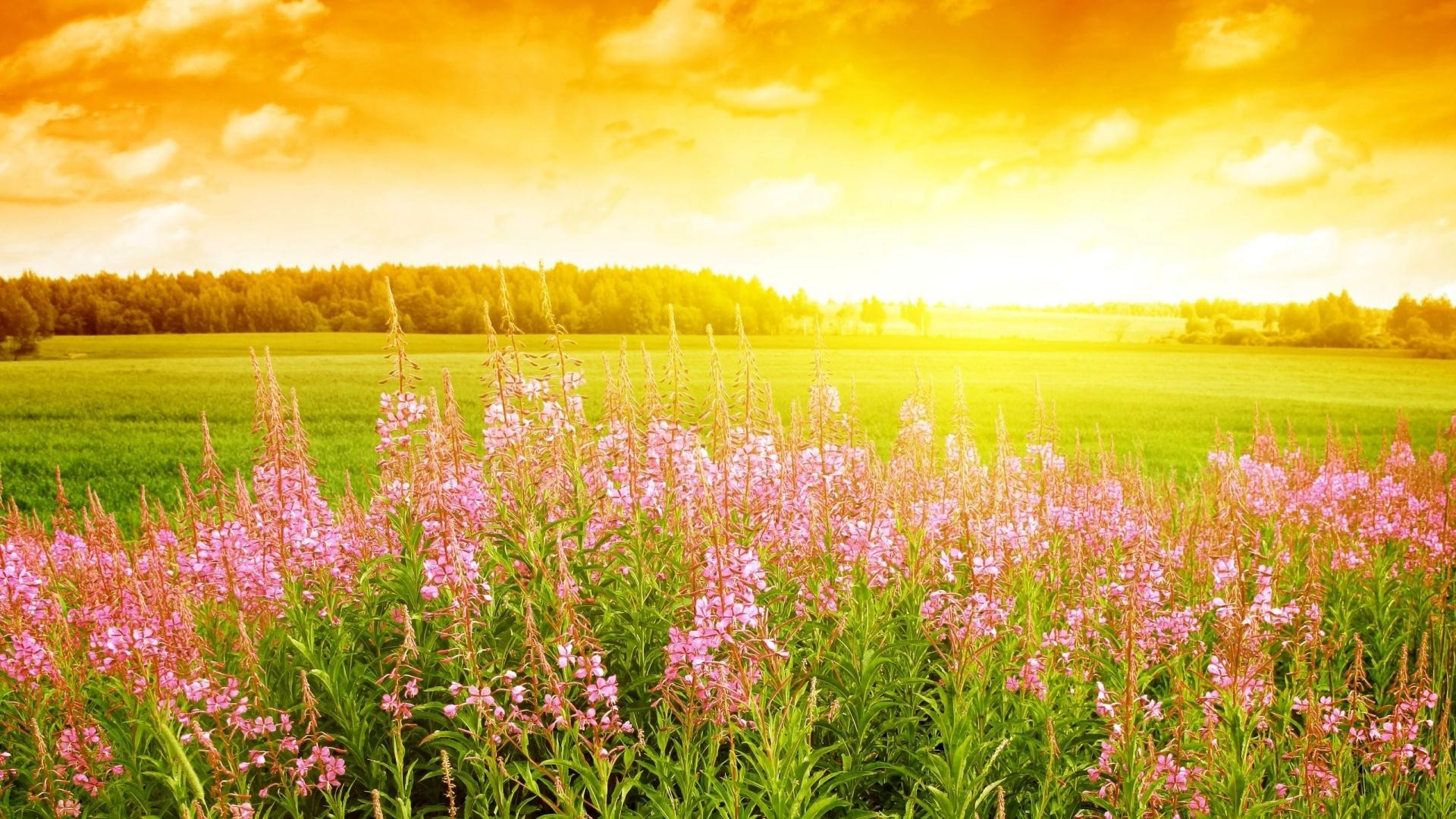 morning bloom of flowers in sun rise nice summer season hd wallpapers free