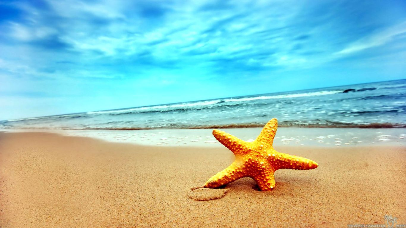 Star Fish Stunning The Sand Watching Sea Images Free Download