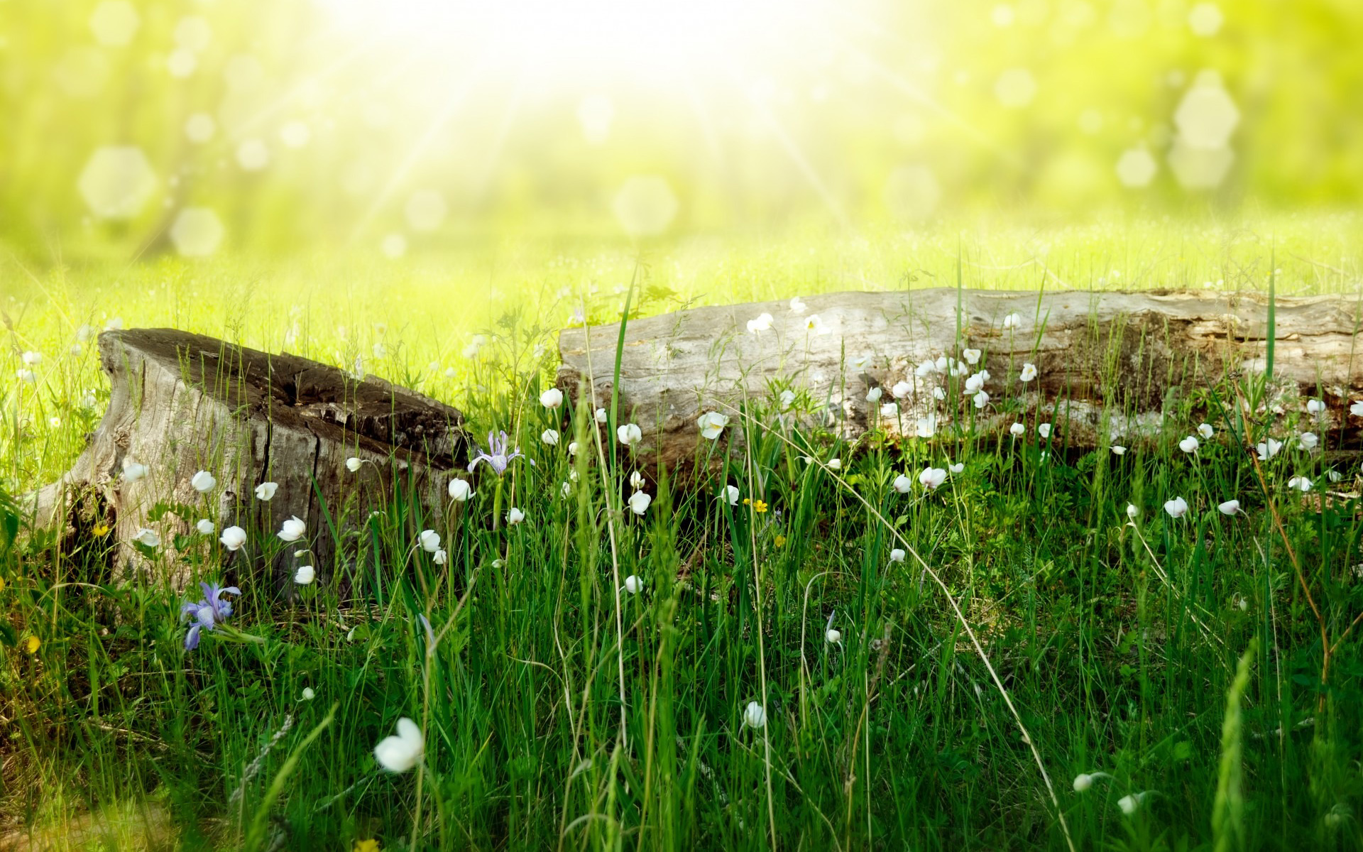 Summer Meadow Nature Wood Hd Wallpaper Image