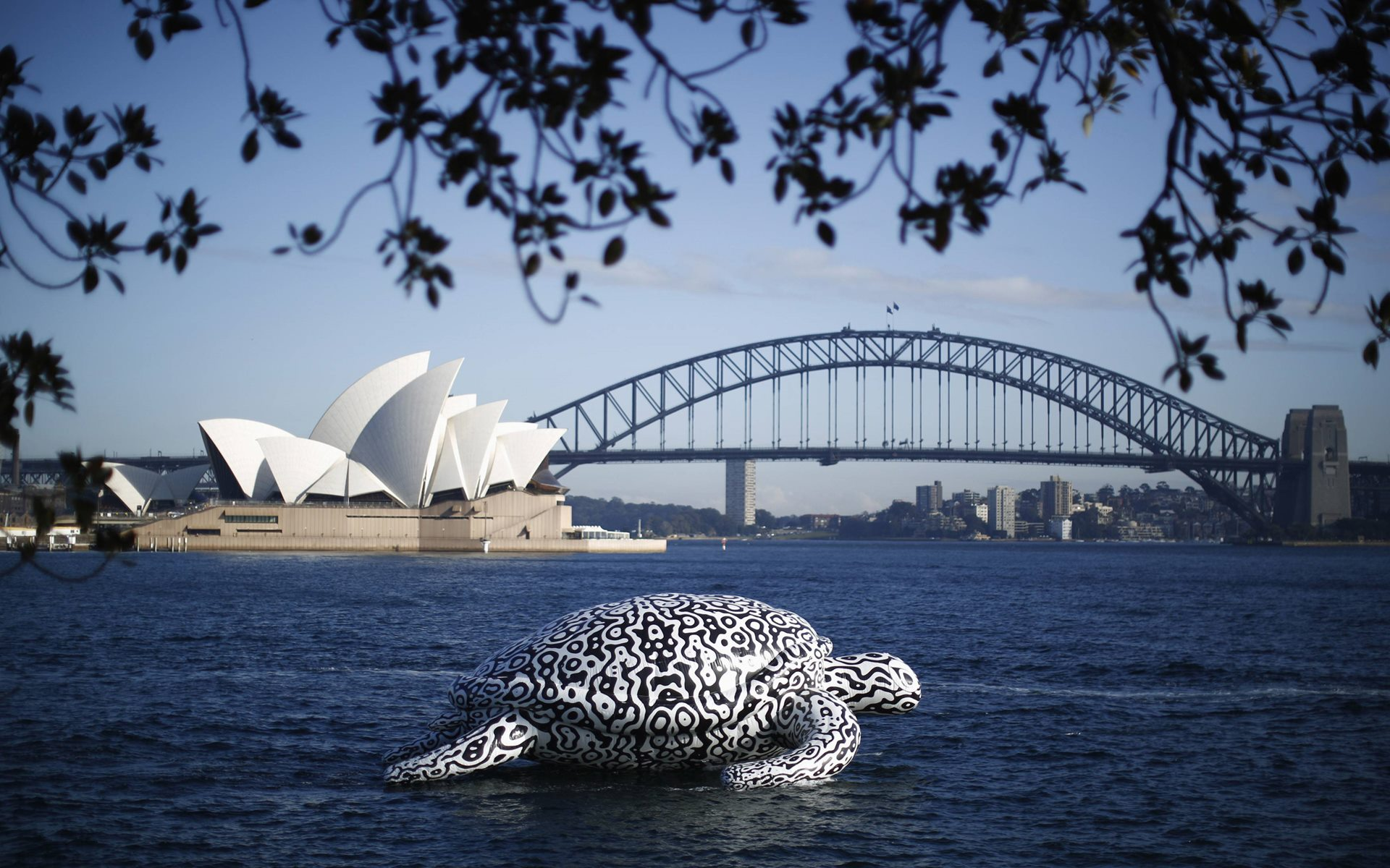 sydney harbour bridge opera house white turtle swimming on australia dektop images pictures wallpaper download free pics
