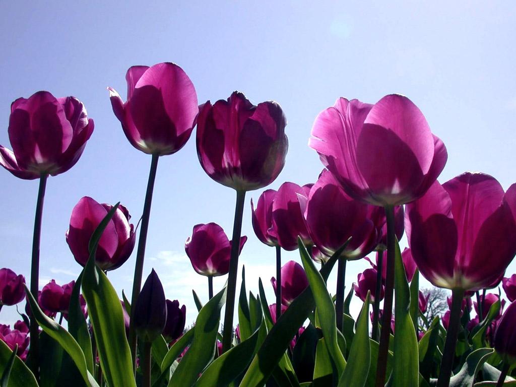 flower | free download hd desktop wallpaper backgrounds images - page 9