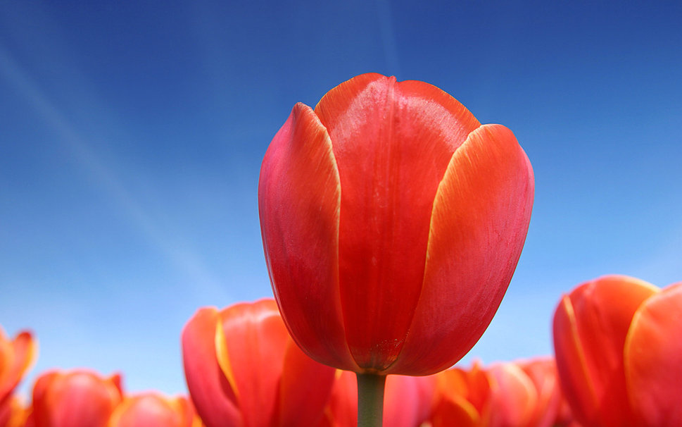 orange background beautiful nature quality best flowers wallpapers