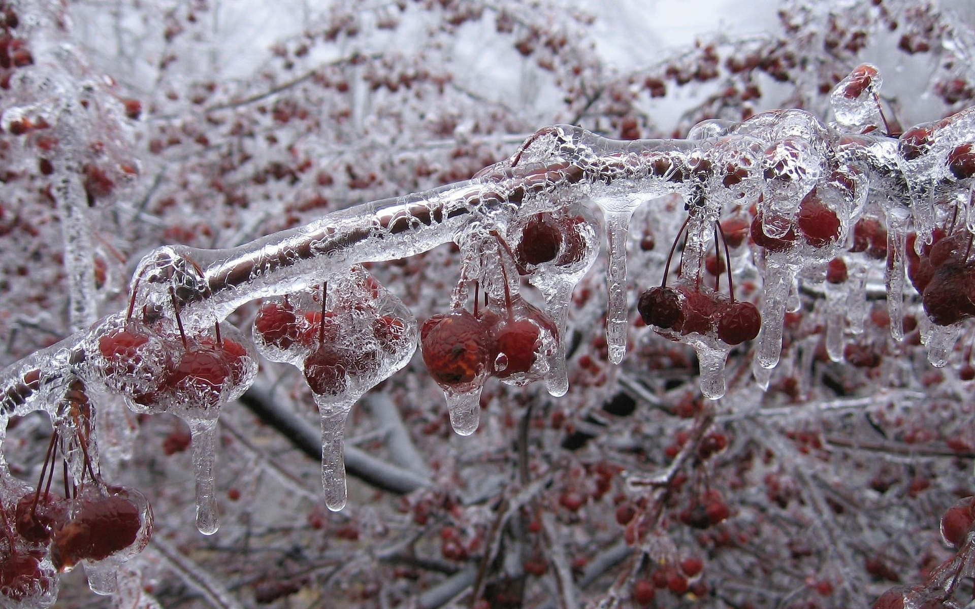 Amazing Winter Fruits Wallpapers Images Pics Download