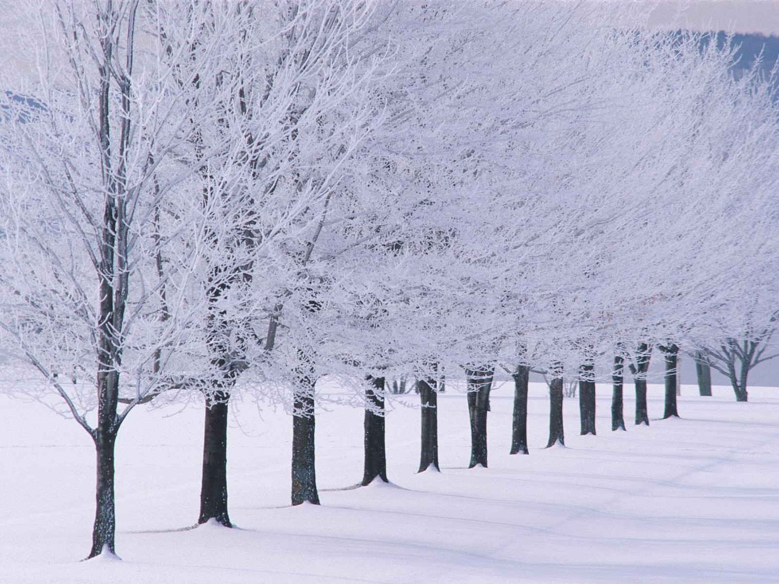 cold winter cute and attractive place hd wallpaper for download