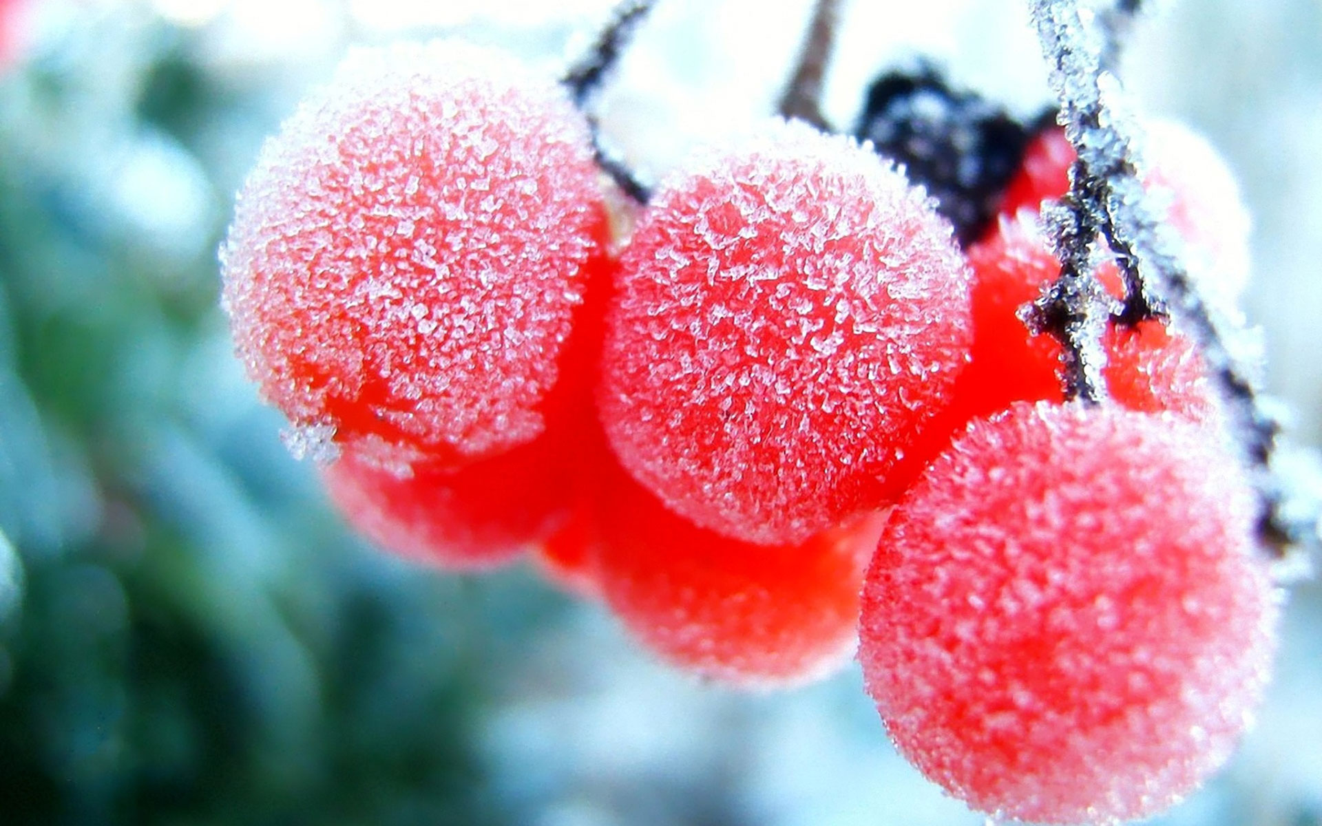 Winter Frozen Fruits Wallpapers Hd Desktop Backgroung Picture