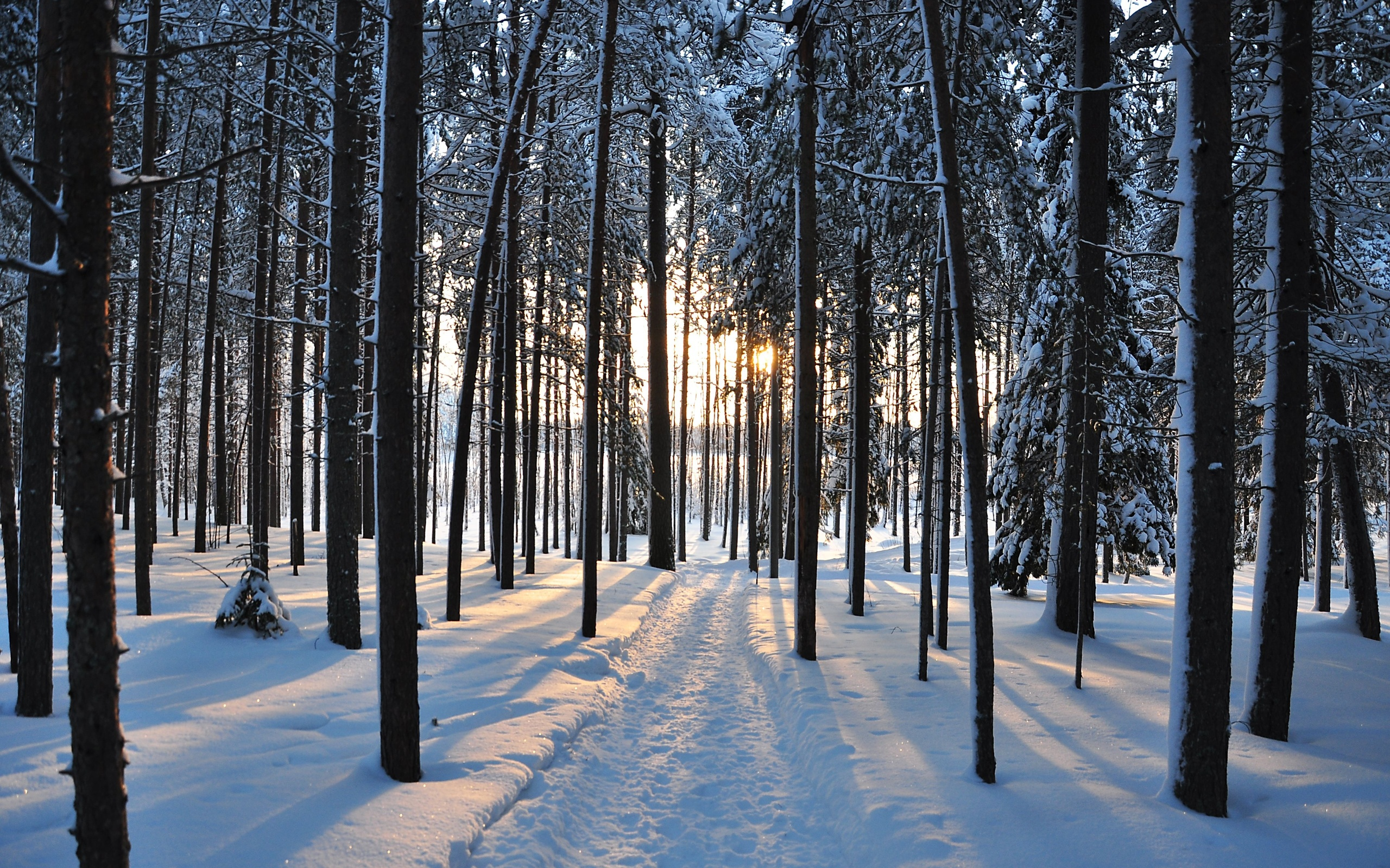 winter trees forest road nature landscape snow wallpaper